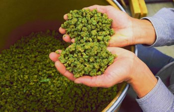 Los Sueños Farms: Not Your Typical Colorado Cannabis Garden 1
