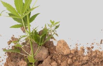 Understanding Your Roots 1