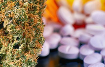 THE END OF CANNABIS SMALL BUSINESS: How the Pharmaceutical Industry is Preparing to Take Over Cannabis 3