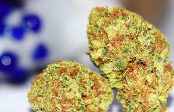 SOUR DIESEL FIELDS FOREVER: Where Gas Meets Fire 1