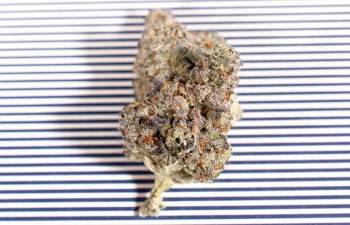 DUNK INTO SOME COOKIES 'N CREAM: The Deliciously Sweet and Stony Treat by Gabriel Cannabis 1