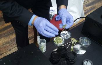 CANNABIS' POTENCY TESTING IN DC: Why Growers Still Need More Info