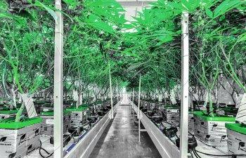 Legendary Laboratories Cannabis Grow Spokane