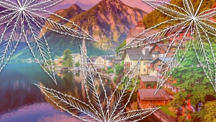 Vienna, Austria Clone Cannabis