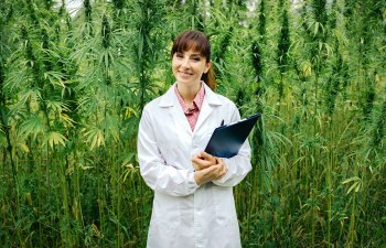 Consuming Cannabis Sublingually Vs. Via Ingestion