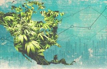 Canada Cannabis Statistics