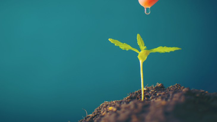 Growing Your Cannabis Company From Seed to Success