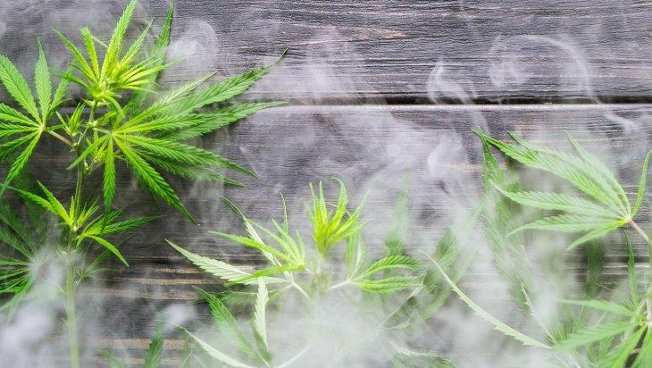 Weedmaps Opening Museum of Weed in 2019