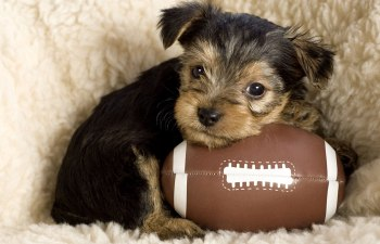 10 Reasons to watch the Puppy Bowl instead of the Super Bowl