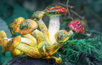 Safeguarding Psilocybin with Decriminalize Denver