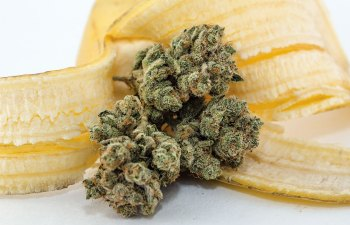C. Banana by Utopia