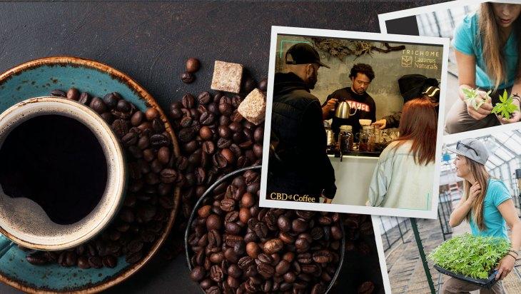 Infused Coffee and Cannabinoids