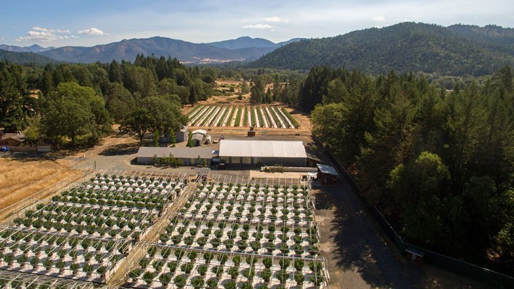 Shadowbox Farms - Applegate Valley, OR