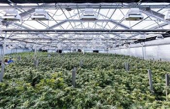 Capital Cannabis Farm - Willamette Valley, OR
