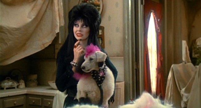 Elvira e il cane Gonk