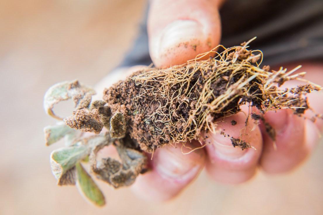 Oros Herbs | Corporate | Dora Dimitriou