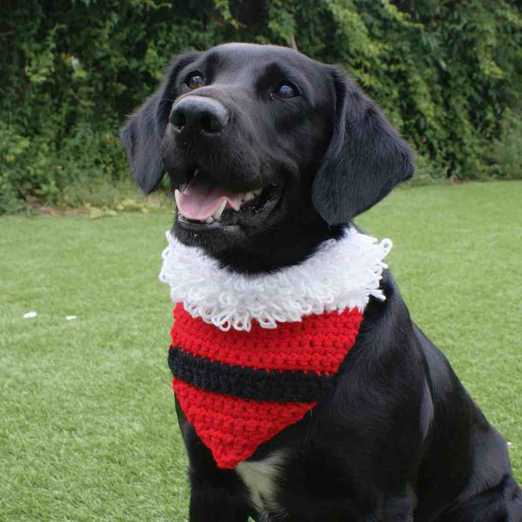 Black dog wearing crochet Santa bandanna sitting on grass