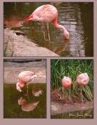 024 Flamingos - San Diego, CA