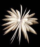011 Pyrotechnic Flower - 4th of July - Low Light Photography