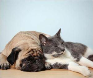 犬,猫,熱中症,症状,痙攣,吐く,対処,対策,予防,方法