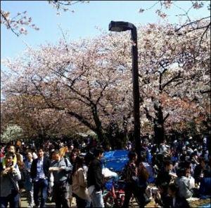 桜,花見,名所,2019,東京都,穴場,夜桜,情報,お勧め,場所