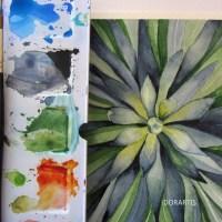 Succulent - green study