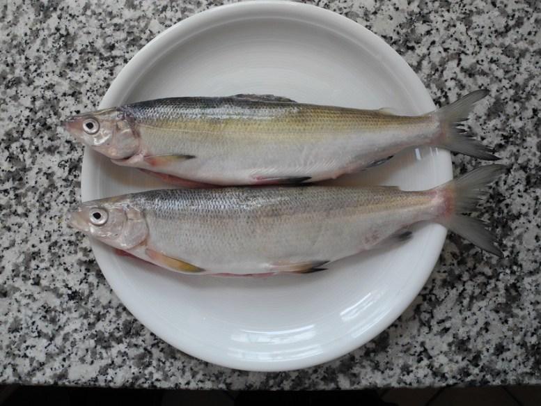 Namen für Renken sind auch Reinanken, Felchen, Coregonen, Schnäpel, Maränen und sind aus der familie der Lachsfische.