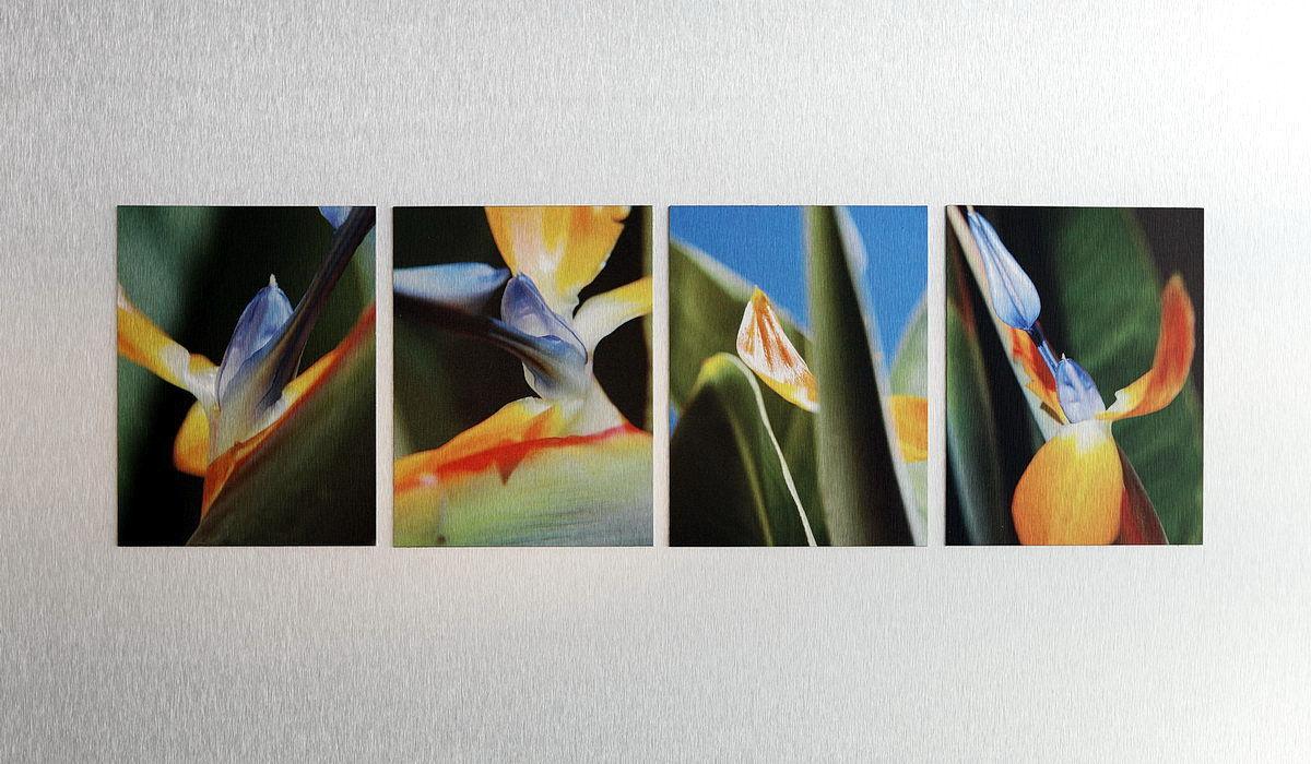 """paradise bird aus dem Zyklus """"alu-alu"""" 80 x 60 cm"""