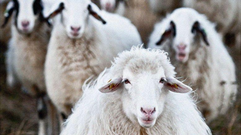 Nett Schäfer Und Schafe Färbung Seite Zeitgenössisch - Entry Level ...