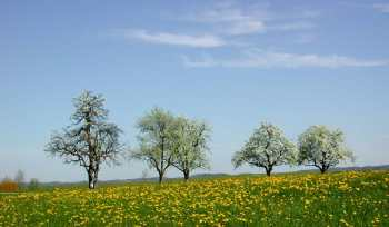 Bienensterben - Frühling