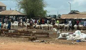 Viehmarkt in Nigeria