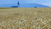 Getreidefeld