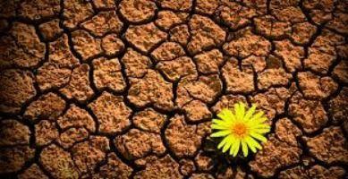 Cómo aprender a ser Resiliente