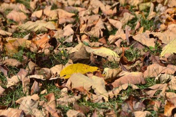 fall (10)
