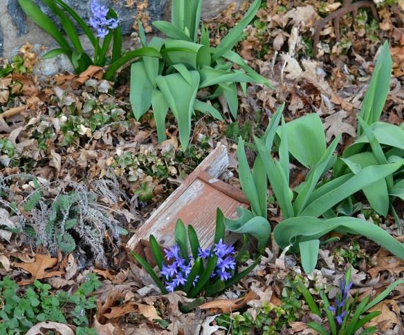 A Pretty Spring Day (7)
