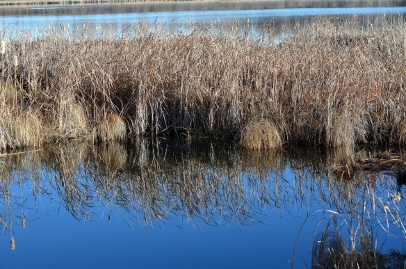 The Lake (31)