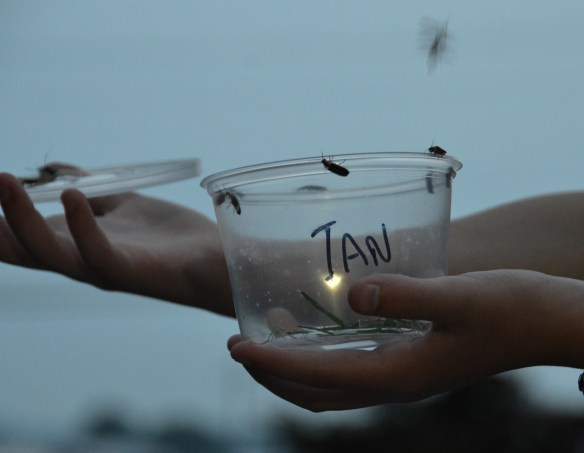 Lightening Bugs (12)