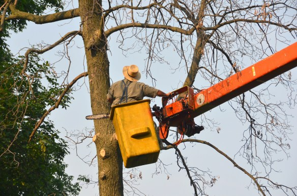 Tree Cutting (2)