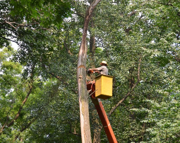 Tree Cutting (35)
