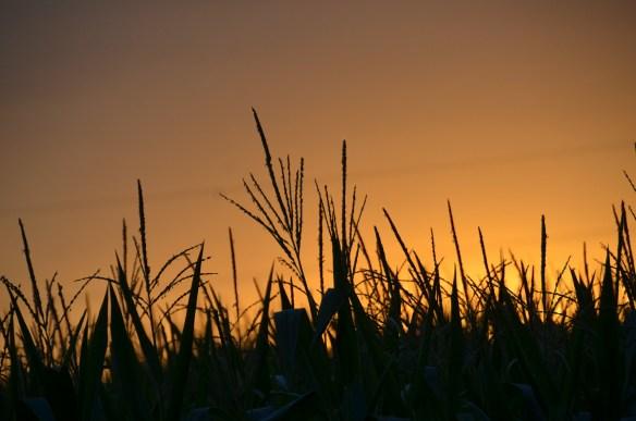 Evening Sky and Sunset (14)