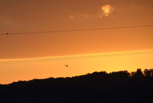 Evening Sky and Sunset (19)