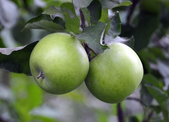 Sam's Orchard (10)