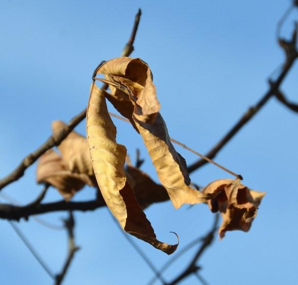 Last flowers and leaves (11)