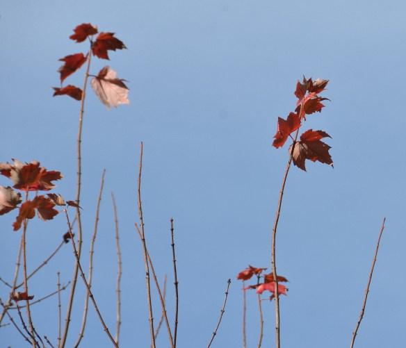 Last flowers and leaves (16)
