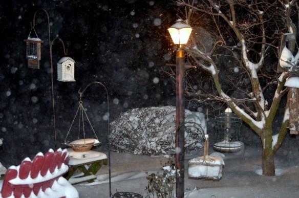 Snow (6)