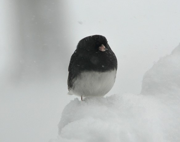 The big snow (26)
