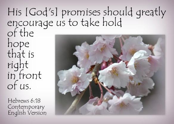Hebrews 6-18