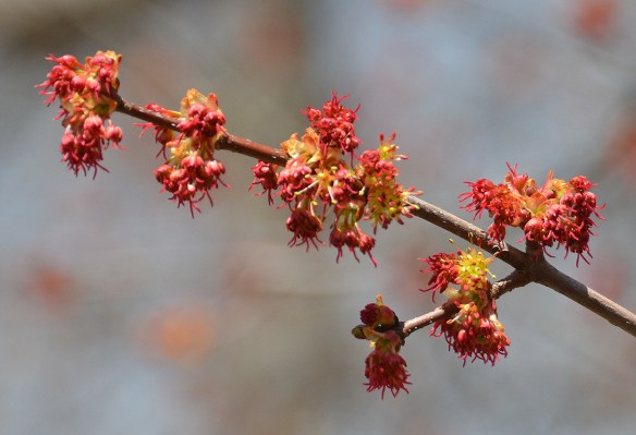 Springtime (12)