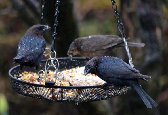 Wed Birds (17)