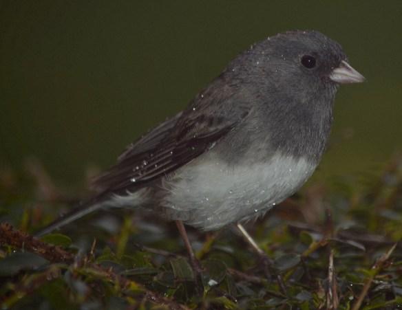 Wed Birds (5)